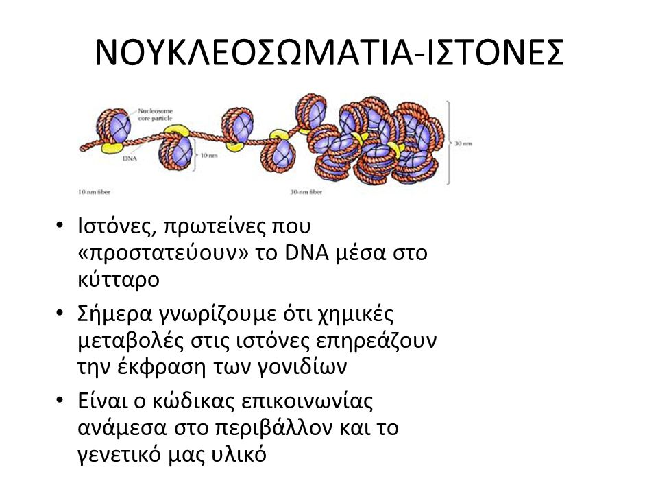 ΝΟΥΚΛΕΟΣΩΜΑΤΙΑ-ΙΣΤΟΝΕΣ Ιστόνες, πρωτείνες που «προστατεύουν» το DNA μέσα στο κύτταρο Σήμερα γνωρίζουμε ότι χημικές μεταβολές στις ιστόνες επηρεάζουν τ