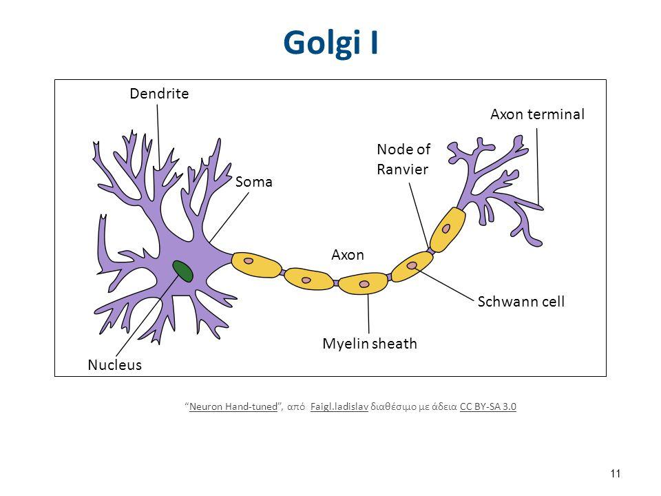 "Golgi I Dendrite Nucleus Soma Axon Myelin sheath Node of Ranvier Axon terminal Schwann cell ""Neuron Hand-tuned"", από Faigl.ladislav διαθέσιμο με άδεια"