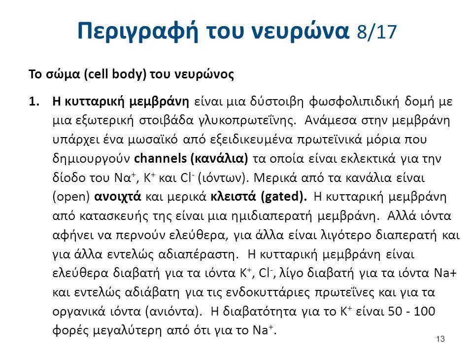 Περιγραφή του νευρώνα 8/17 Το σώμα (cell body) του νευρώνος 1.Η κυτταρική μεμβράνη είναι μια δύστοιβη φωσφολιπιδική δομή με μια εξωτερική στοιβάδα γλυ
