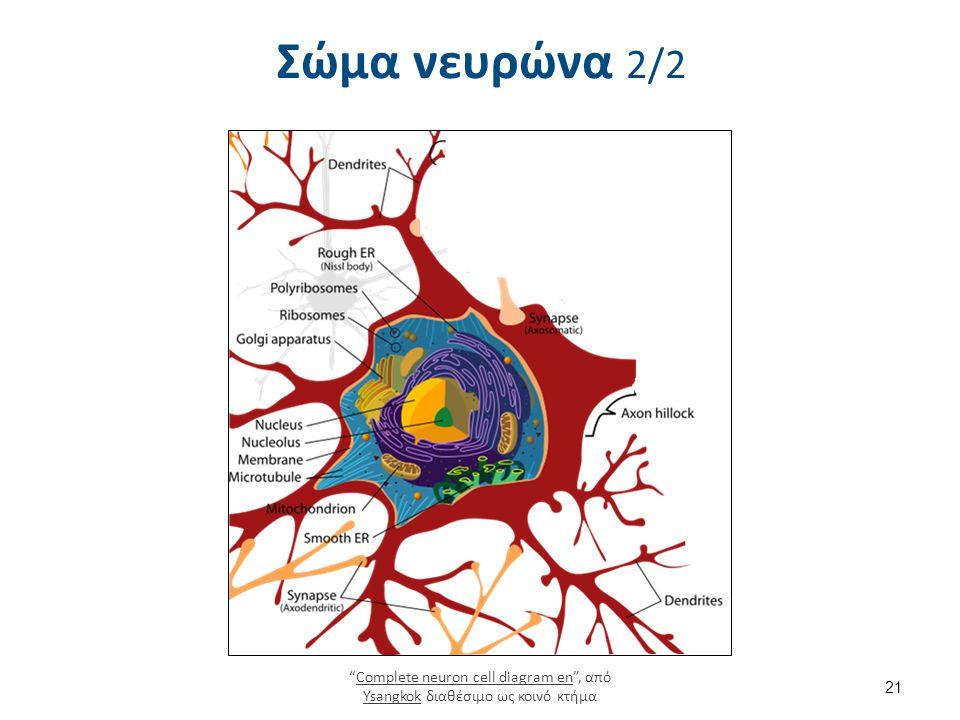 """Σώμα νευρώνα 2/2 """"Complete neuron cell diagram en"""", από Ysangkok διαθέσιμο ως κοινό κτήμαComplete neuron cell diagram en Ysangkok 21"""