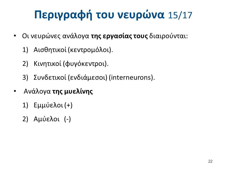 Περιγραφή του νευρώνα 15/17 Oι νευρώνες ανάλογα της εργασίας τους διαιρούνται: 1)Αισθητικοί (κεντρομόλοι). 2)Κινητικοί (φυγόκεντροι). 3)Συνδετικοί (εν