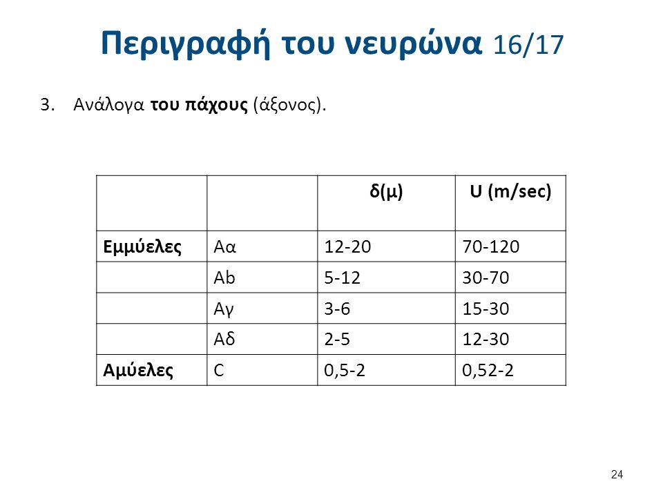 Περιγραφή του νευρώνα 16/17 3.Ανάλογα του πάχους (άξονος). δ(μ) U (m/sec) ΕμμύελεςΑα12-2070-120 Ab5-1230-70 Αγ3-615-30 Αδ2-512-30 ΑμύελεςC0,5-20,52-2