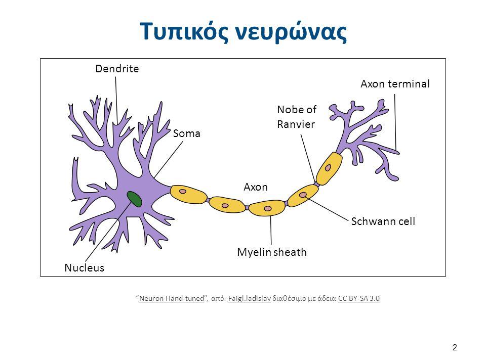 """Τυπικός νευρώνας Dendrite Nucleus Soma Axon Myelin sheath Nobe of Ranvier Axon terminal Schwann cell """"Neuron Hand-tuned"""", από Faigl.ladislav διαθέσιμο"""