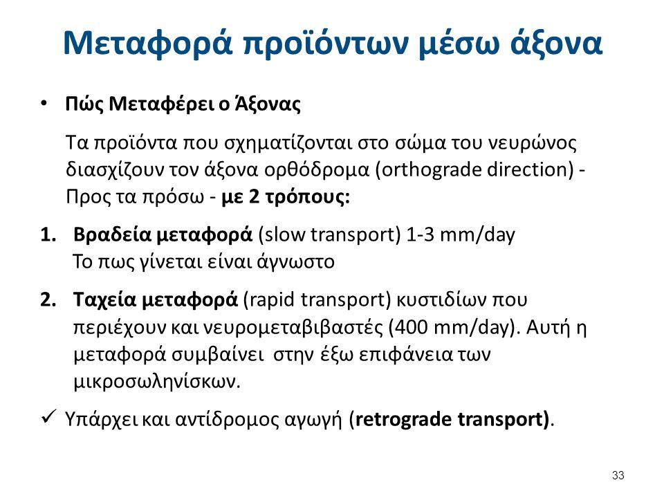 Μεταφορά προϊόντων μέσω άξονα Πώς Μεταφέρει ο Άξονας Τα προϊόντα που σχηματίζονται στο σώμα του νευρώνος διασχίζουν τον άξονα ορθόδρομα (orthograde di