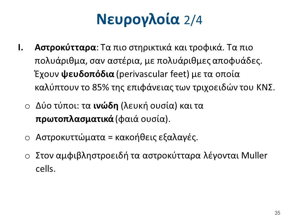 Νευρογλοία 2/4 I.Aστροκύτταρα: Τα πιο στηρικτικά και τροφικά. Τα πιο πολυάριθμα, σαν αστέρια, με πολυάριθμες αποφυάδες. Έχουν ψευδοπόδια (perivascular