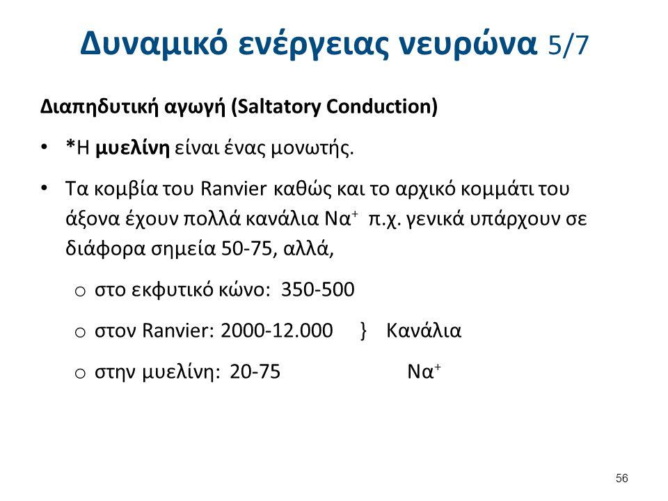 Δυναμικό ενέργειας νευρώνα 5/7 Διαπηδυτική αγωγή (Saltatory Conduction) *H μυελίνη είναι ένας μονωτής. Τα κομβία του Ranvier καθώς και το αρχικό κομμά