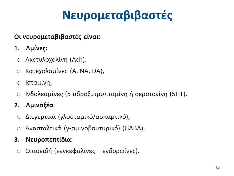 Νευρομεταβιβαστές Οι νευρομεταβιβαστές είναι: 1.Αμίνες: o Ακετυλοχολίνη (Ach), o Kατεχολαμίνες (Α, ΝΑ, DA), o Ισταμίνη, o Ινδολεαμίνες (5 υδροξυτρυπτα