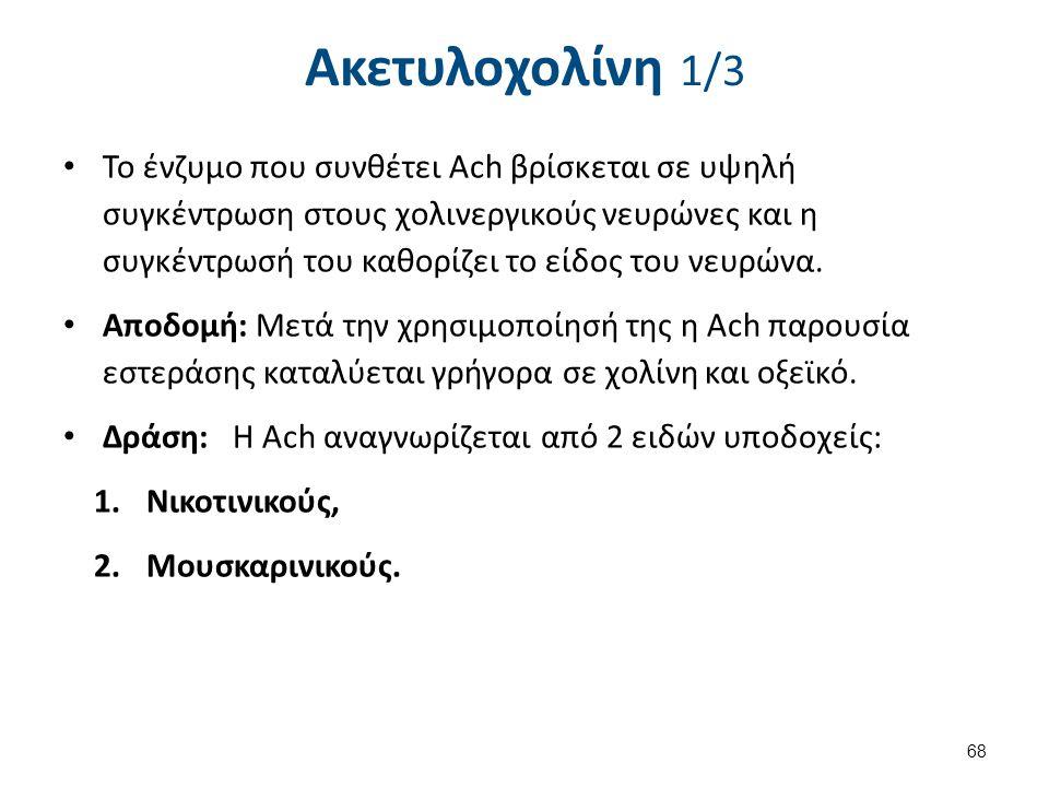 Ακετυλοχολίνη 1/3 Το ένζυμο που συνθέτει Ach βρίσκεται σε υψηλή συγκέντρωση στους χολινεργικούς νευρώνες και η συγκέντρωσή του καθορίζει το είδος του