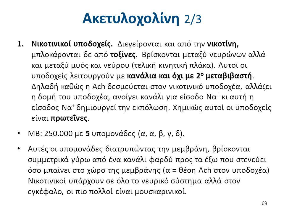 Ακετυλοχολίνη 2/3 1.Νικοτινικοί υποδοχείς. Διεγείρονται και από την νικοτίνη, μπλοκάρονται δε από τοξίνες. Βρίσκονται μεταξύ νευρώνων αλλά και μεταξύ