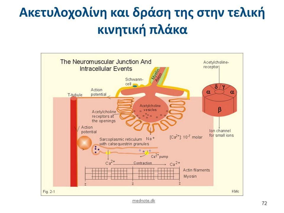 Ακετυλοχολίνη και δράση της στην τελική κινητική πλάκα mednote.dk 72