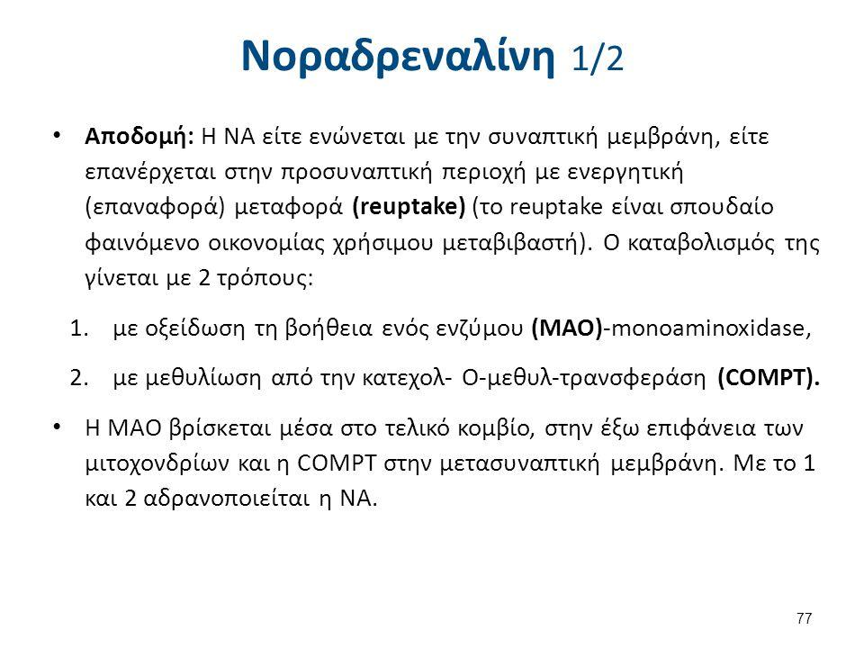 Νοραδρεναλίνη 1/2 Αποδομή: Η ΝΑ είτε ενώνεται με την συναπτική μεμβράνη, είτε επανέρχεται στην προσυναπτική περιοχή με ενεργητική (επαναφορά) μεταφορά