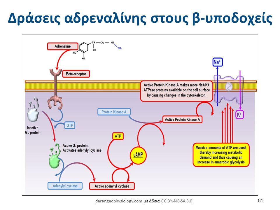 Δράσεις αδρεναλίνης στους β-υποδοχείς derangedphysiology.comderangedphysiology.com με άδεια CC BY-NC-SA 3.0CC BY-NC-SA 3.0 81