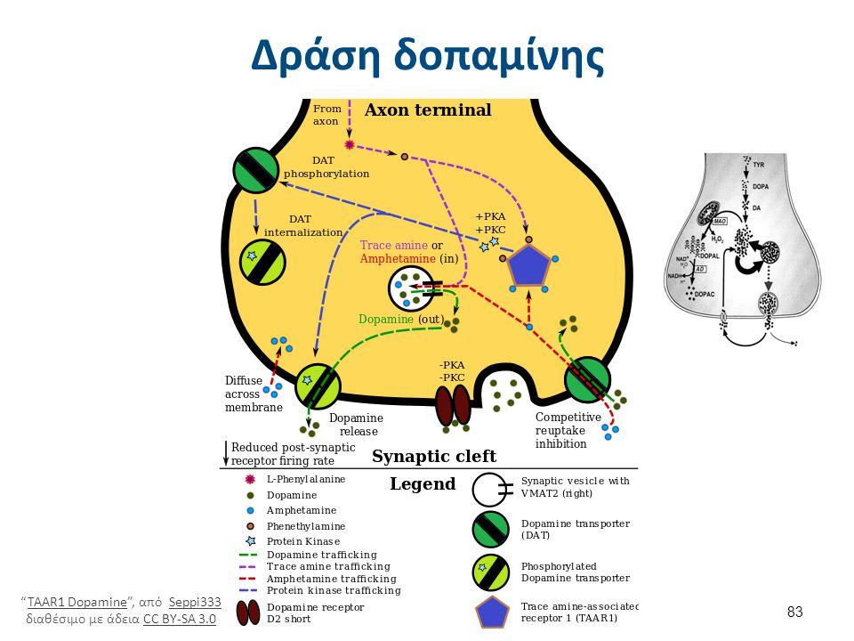 """Δράση δοπαμίνης """"TAAR1 Dopamine"""", από Seppi333 διαθέσιμο με άδεια CC BY-SA 3.0TAAR1 DopamineSeppi333CC BY-SA 3.0 83"""