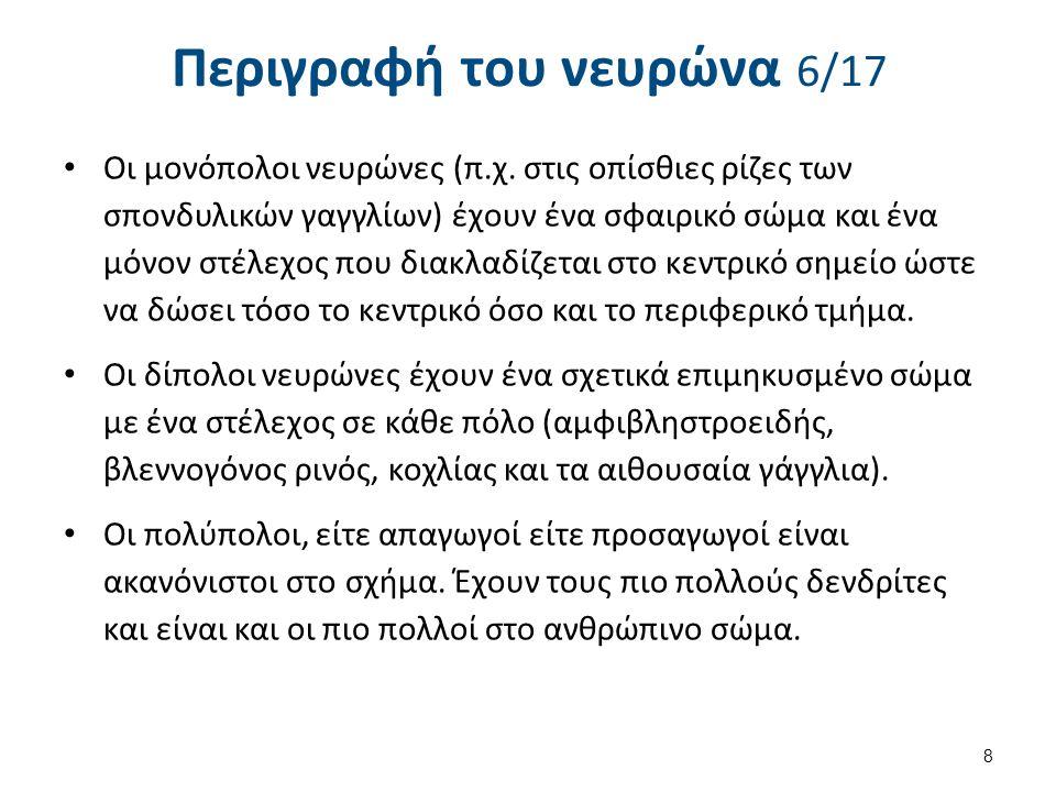 Ακετυλοχολίνη 2/3 1.Νικοτινικοί υποδοχείς.