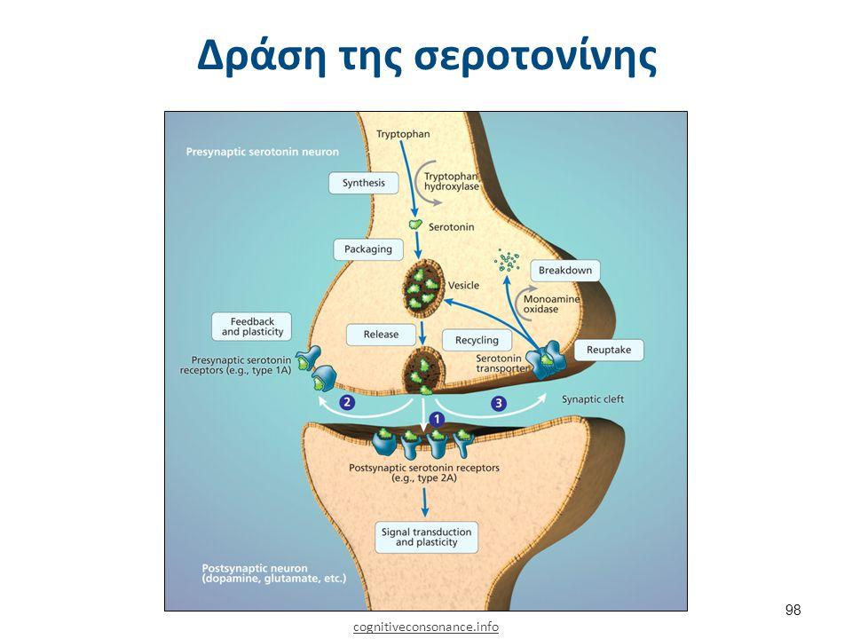 Δράση της σεροτονίνης cognitiveconsonance.info 98