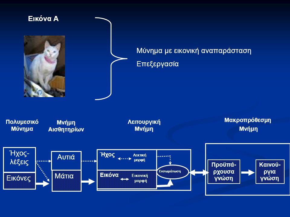 Διαδικασία Επεξεργασίας Πολυμεσικού μυνήματος Πολυμεσικό Μύνημα Μνήμη Αισθητηρίων Λειτουργική Μνήμη Μακροπρόθεσμη Μνήμη Ήχος- λέξεις Εικόνες Αυτιά Μάτ