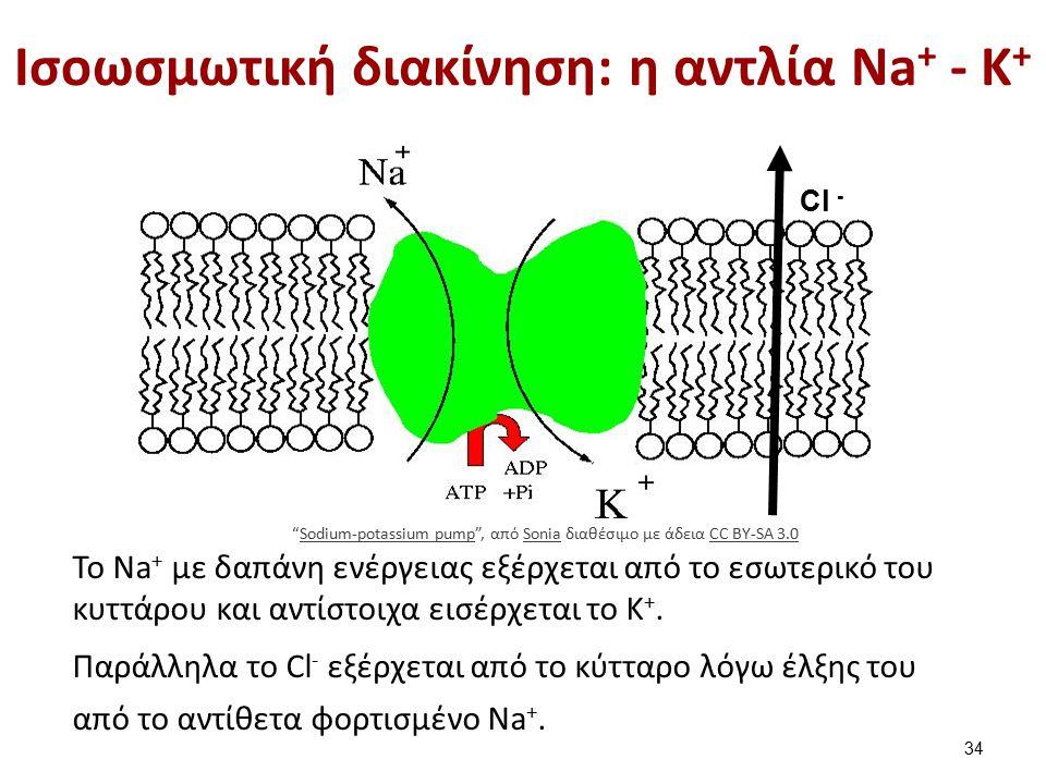 Ισοωσμωτική διακίνηση: η αντλία Νa + - K + Cl - Το Νa + με δαπάνη ενέργειας εξέρχεται από το εσωτερικό του κυττάρου και αντίστοιχα εισέρχεται το K +.