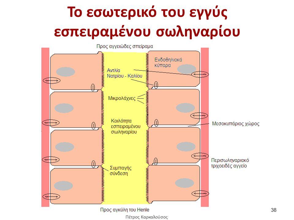 To εσωτερικό του εγγύς εσπειραμένου σωληναρίου 38 Πέτρος Καρκαλούσος