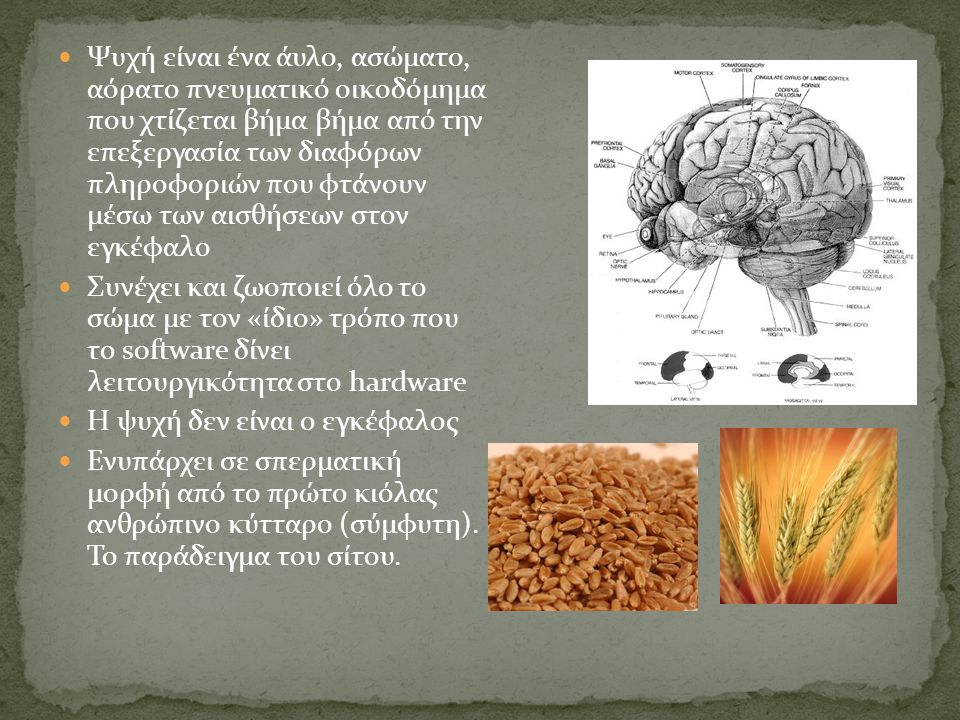 Ψυχή είναι ένα άυλο, ασώματο, αόρατο πνευματικό οικοδόμημα που χτίζεται βήμα βήμα από την επεξεργασία των διαφόρων πληροφοριών που φτάνουν μέσω των αισθήσεων στον εγκέφαλο Συνέχει και ζωοποιεί όλο το σώμα με τον «ίδιο» τρόπο που το software δίνει λειτουργικότητα στο hardware Η ψυχή δεν είναι ο εγκέφαλος Ενυπάρχει σε σπερματική μορφή από το πρώτο κιόλας ανθρώπινο κύτταρο (σύμφυτη).