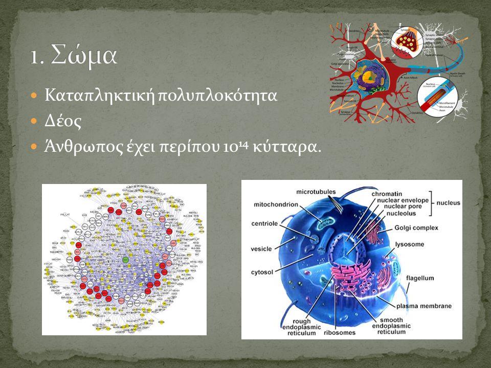 Καταπληκτική πολυπλοκότητα Δέος Άνθρωπος έχει περίπου 10 14 κύτταρα.