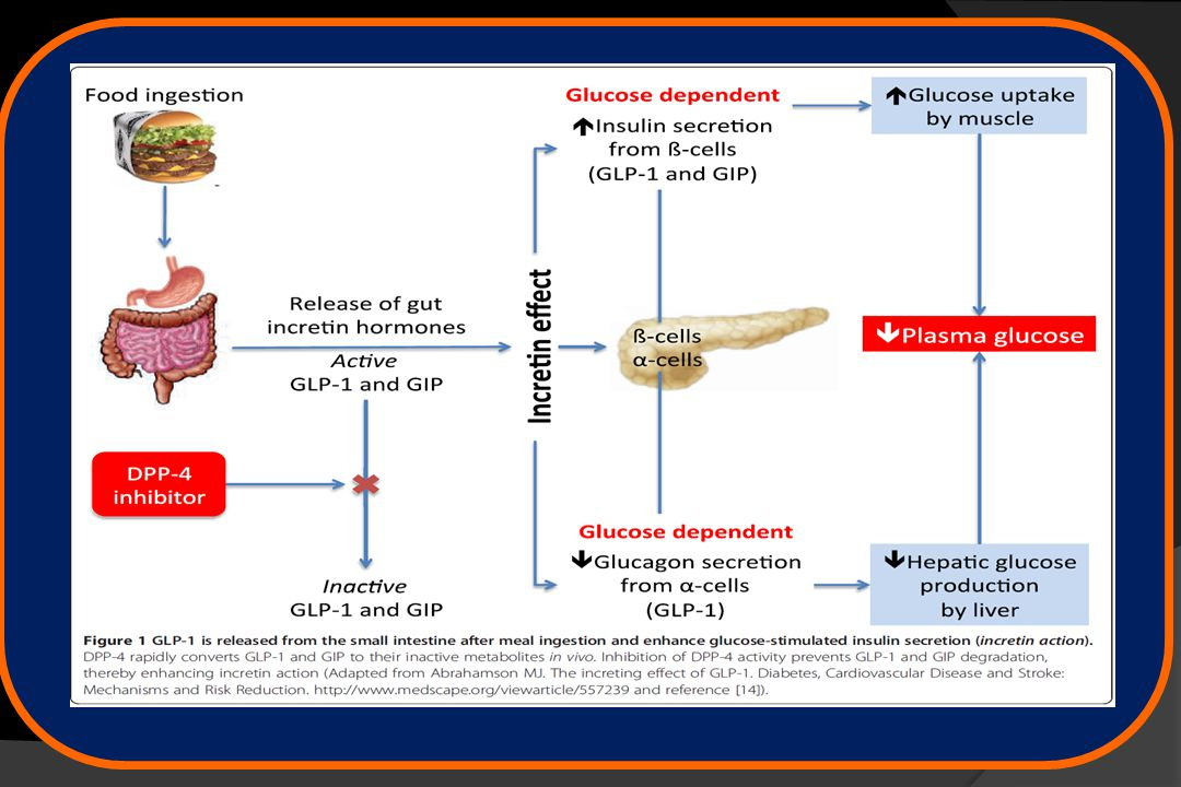 Only Exenatide Has 5 Key Actions Organs5 Benefits of Exenatide 1-4 Exenatide Key Clinical Results 4 Enhances glucose-dependent insulin secretion Sustained A1C control Low risk of hypoglycemia when used with metformin † Weight loss Restores first-phase insulin response Suppresses glucagon; reduces glucose output Slows gastric emptying Decreases food intake* *This effect is postulated to be mediated through the central nervous system.