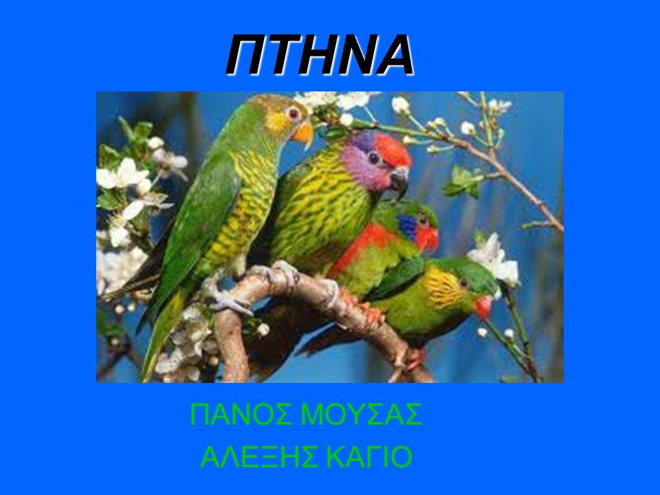 ΠΤΗΝΑ Τα πτηνά (πουλιά) είναι ζώα ομοιόθερμα σπονδυλωτά, που στη συντριπτική πλειονότητα τους μπορούν να πετούν με τις πτέρυγες ή φτερο76ύγες, οι οποίες βρίσκονται στη θέση των πάνω άκρων τους.