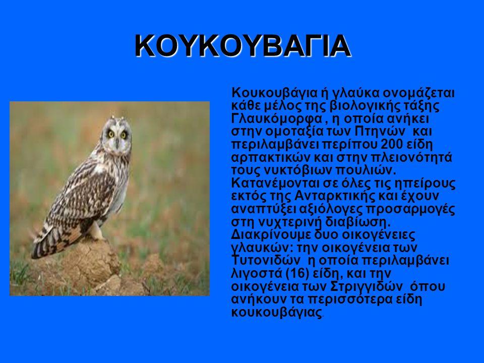 ΚΟΥΚΟΥΒΑΓΙΑ Κουκουβάγια ή γλαύκα ονομάζεται κάθε μέλος της βιολογικής τάξης Γλαυκόμορφα, η οποία ανήκει στην ομοταξία των Πτηνών και περιλαμβάνει περίπου 200 είδη αρπακτικών και στην πλειονότητά τους νυκτόβιων πουλιών.