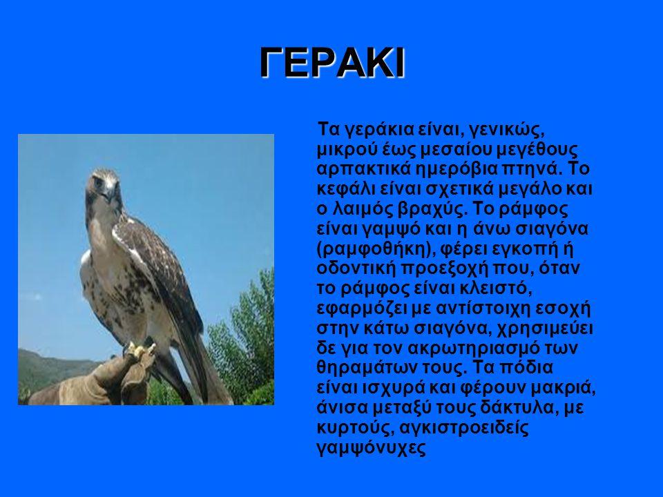 ΓΕΡΑΚΙ Τα γεράκια είναι, γενικώς, μικρού έως μεσαίου μεγέθους αρπακτικά ημερόβια πτηνά. Το κεφάλι είναι σχετικά μεγάλο και ο λαιμός βραχύς. Το ράμφος