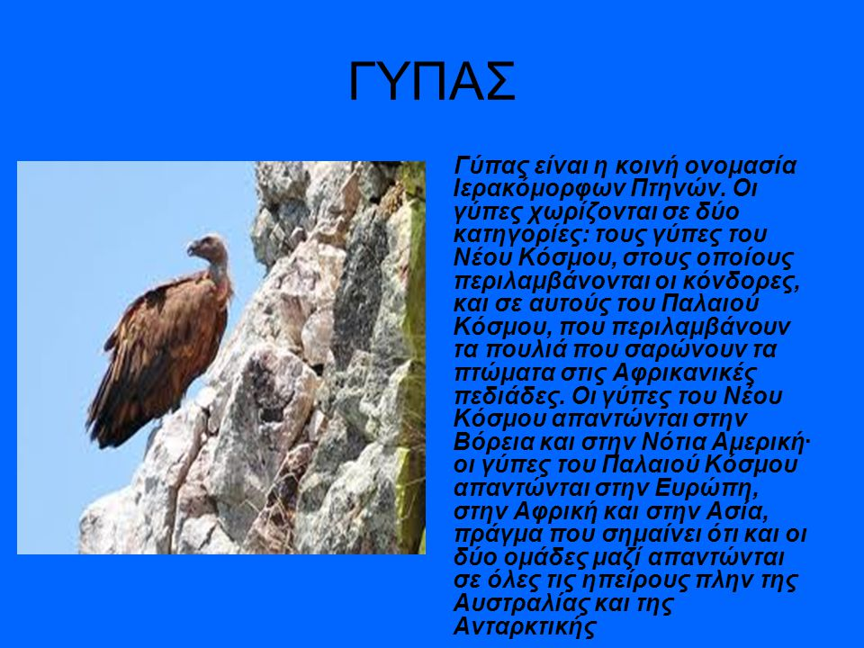 ΓΥΠΑΣ Γύπας είναι η κοινή ονομασία Ιερακόμορφων Πτηνών. Oι γύπες χωρίζονται σε δύο κατηγορίες: τους γύπες του Νέου Κόσμου, στους οποίους περιλαμβάνοντ