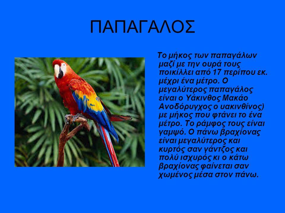 ΠΑΠΑΓΑΛΟΣ Το μήκος των παπαγάλων μαζί με την ουρά τους ποικίλλει από 17 περίπου εκ. μέχρι ένα μέτρο. Ο μεγαλύτερος παπαγάλος είναι ο Υάκινθος Μακάο Αν