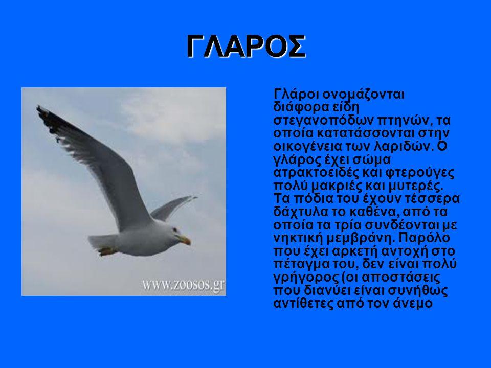 ΓΛΑΡΟΣ Γλάροι ονομάζονται διάφορα είδη στεγανοπόδων πτηνών, τα οποία κατατάσσονται στην οικογένεια των λαριδών. Ο γλάρος έχει σώμα ατρακτοειδές και φτ