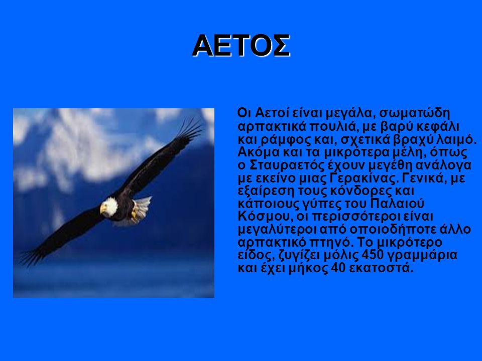 ΑΕΤΟΣ Οι Αετοί είναι μεγάλα, σωματώδη αρπακτικά πουλιά, με βαρύ κεφάλι και ράμφος και, σχετικά βραχύ λαιμό. Ακόμα και τα μικρότερα μέλη, όπως ο Σταυρα