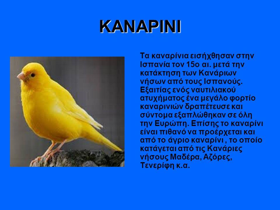 ΠΑΠΙΑ Το πτηνό έχει στο σώμα του πυκνά φτερά, τα οποία είναι ελαφριά.