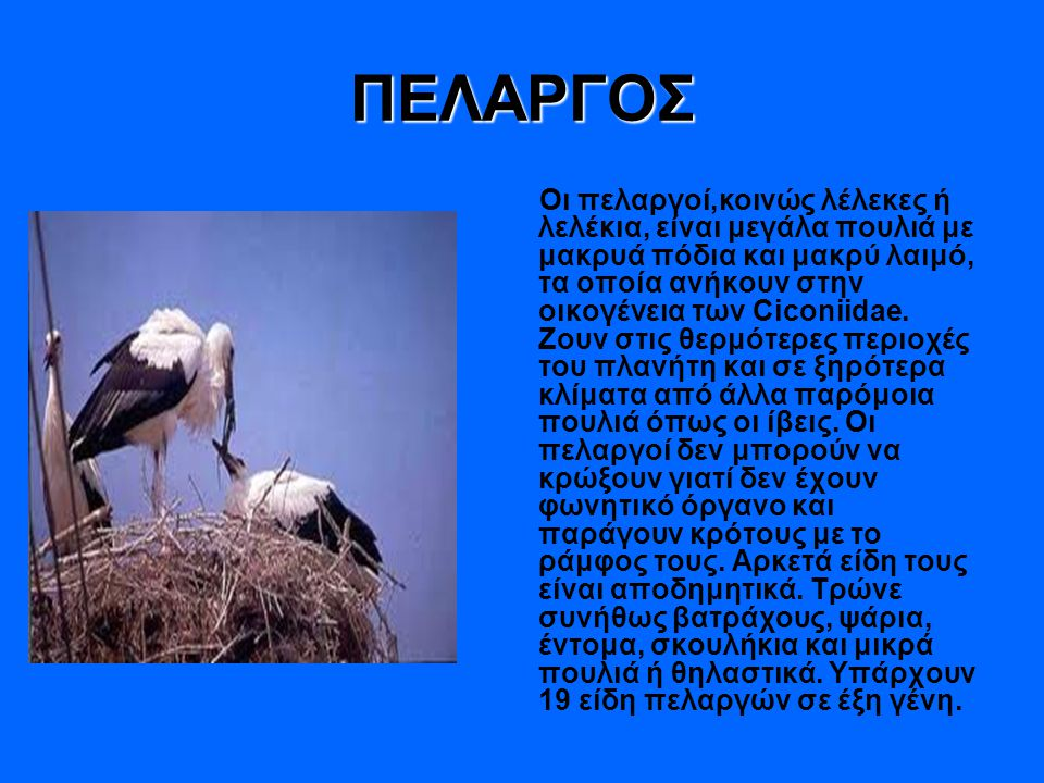 ΠΕΛΑΡΓΟΣ Οι πελαργοί,κοινώς λέλεκες ή λελέκια, είναι μεγάλα πουλιά με μακρυά πόδια και μακρύ λαιμό, τα οποία ανήκουν στην οικογένεια των Ciconiidae. Ζ