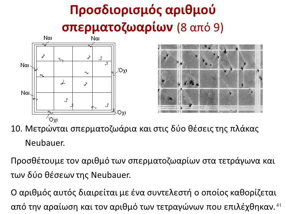 10.Μετρώνται σπερματοζωάρια και στις δύο θέσεις της πλάκας Neubauer. Προσθέτουμε τον αριθμό των σπερματοζωαρίων στα τετράγωνα και των δύο θέσεων της N