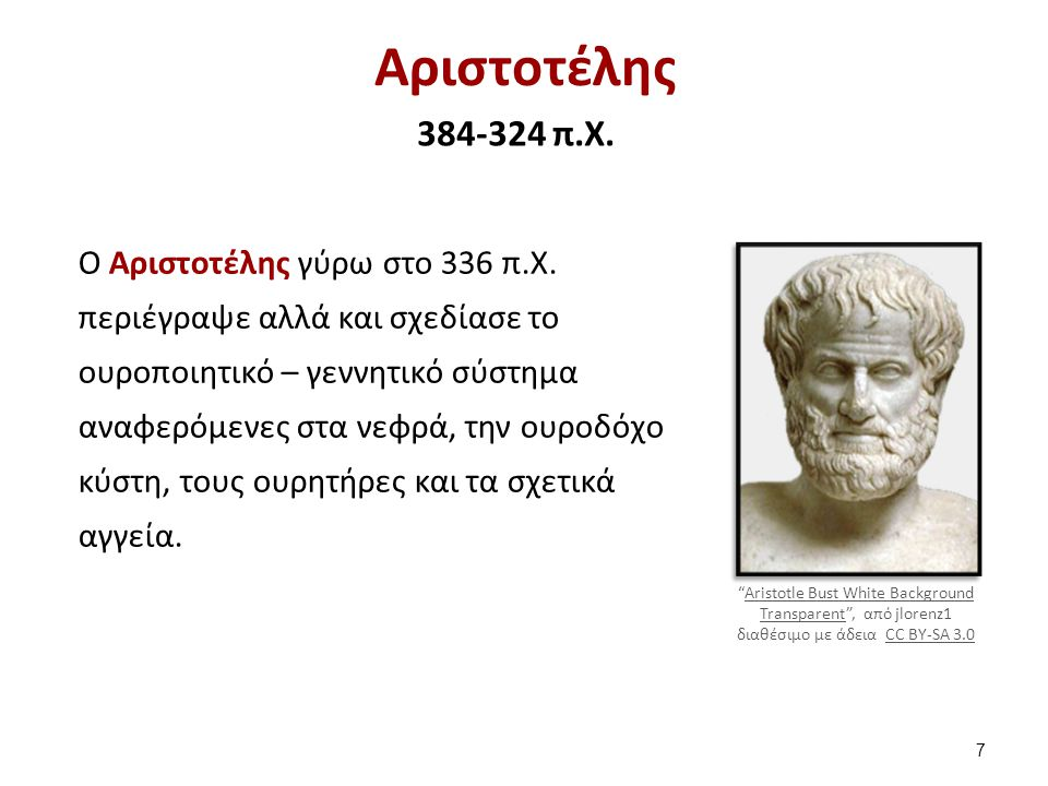 Αριστοτέλης 384-324 π.Χ. Ο Αριστοτέλης γύρω στο 336 π.Χ. περιέγραψε αλλά και σχεδίασε το ουροποιητικό – γεννητικό σύστημα αναφερόμενες στα νεφρά, την