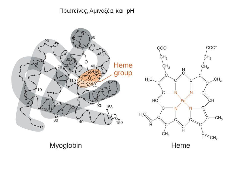 pK a Αμινοξέων με μια ιονιζόμενη ομάδα -R Amino Acid α-COOH pK a1 α-NH 3 + pK a2 Πλευρική αλυσίδα pK a3 pI Arginine2.009.0013.2011.15 Histidine1.829.1