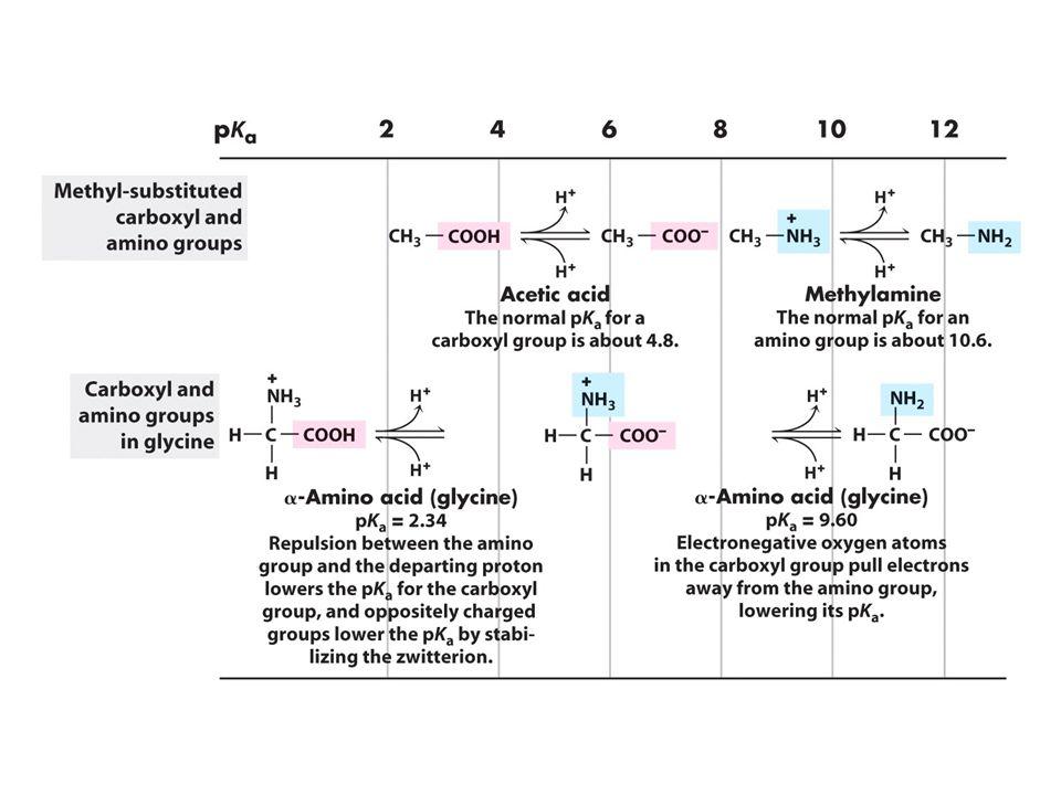 Ογκομέτρηση Αμινοξέων pH, pK a, και pI Τι συνάγουμε από τις καμπύλες ογκομέτρησης?