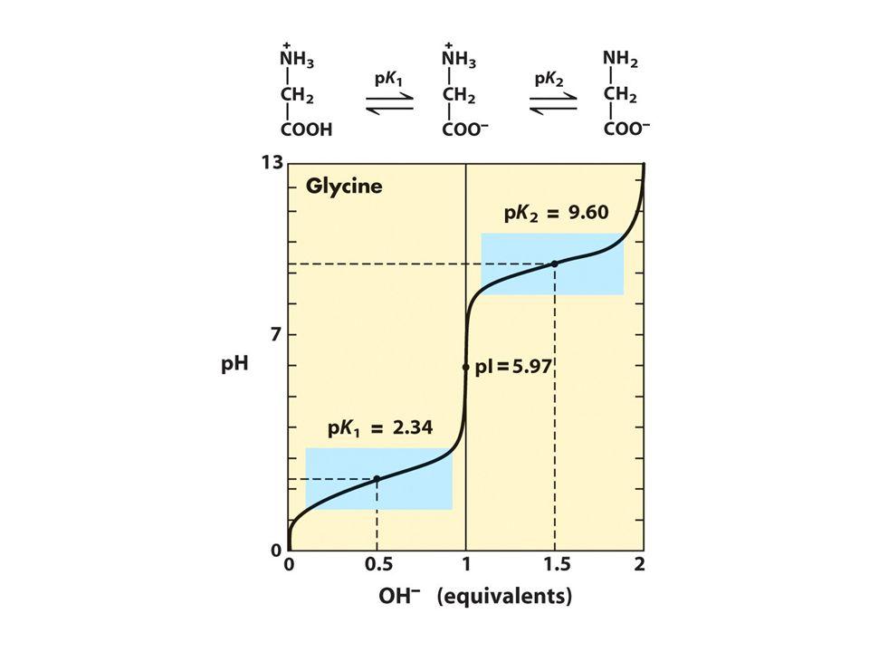 Καμπύλη ογκομέτρησης ενός αμινοξέος pK 1 =2 pK 2 =9.5 pH 0 1.0 1.5 2.0 0.5 2.0 9.5 -COOH Equivalents OH- Γλυκίνη -COOH -COO - H 3 N- + H 2 N- H 3 N- +
