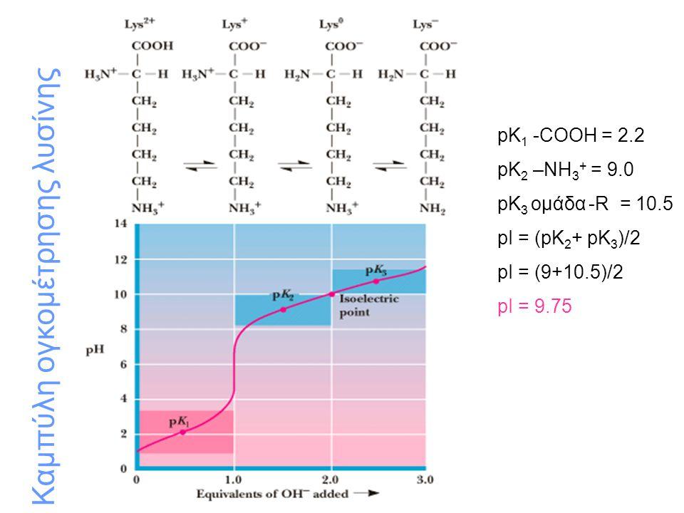 Μορφή αμινοξέος και pH