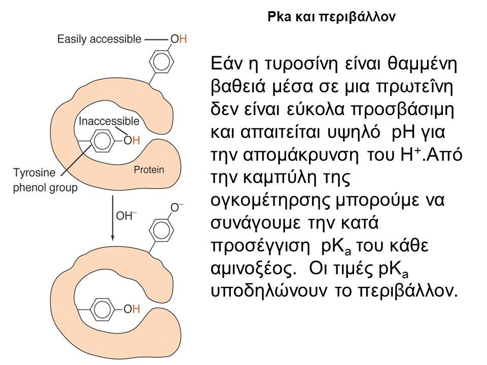 Υπολογισμός pI στις πρωτεΐνες μέσω του WWW