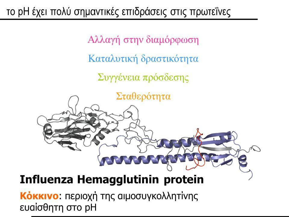 Ελεγχος από το pH της πρωτεϊνικής λειτουργίας Η πρωτεϊνική λειτουργία τροποποιείται ανάλογα με το μικροπεριβάλλον