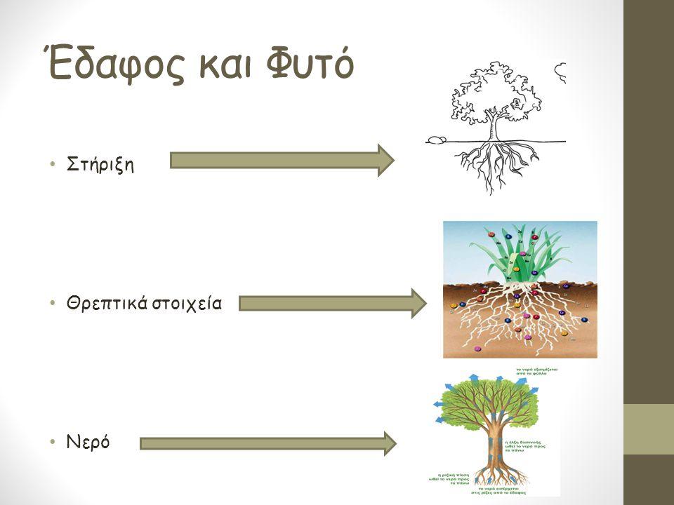 Οι Τρείς Φάσεις του Εδάφους Στερεά Υγρή Αέρια