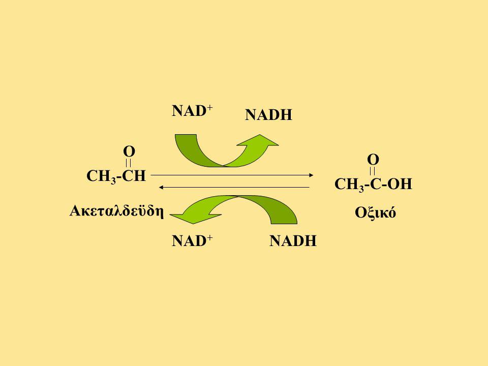 CH 3 -CH O Ακεταλδεϋδη NAD + NADH CH 3 -C-OH O Οξικό NADHNAD +