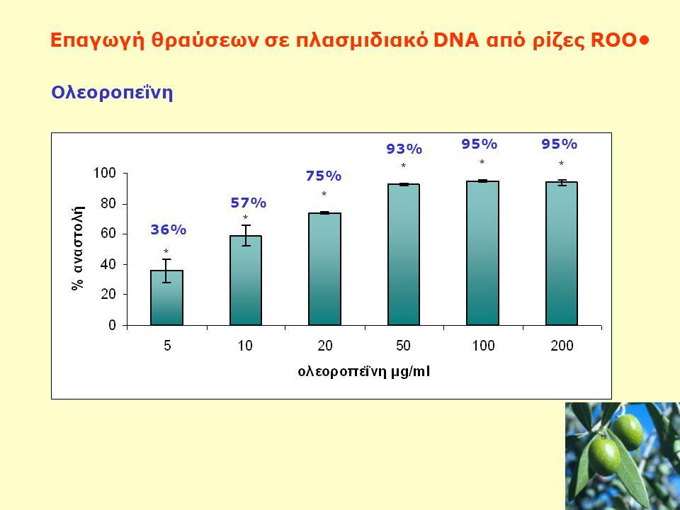 Ολεοροπεΐνη Επαγωγή θραύσεων σε πλασμιδιακό DNA από ρίζες ROO 36% 57% 75% 93% 95%