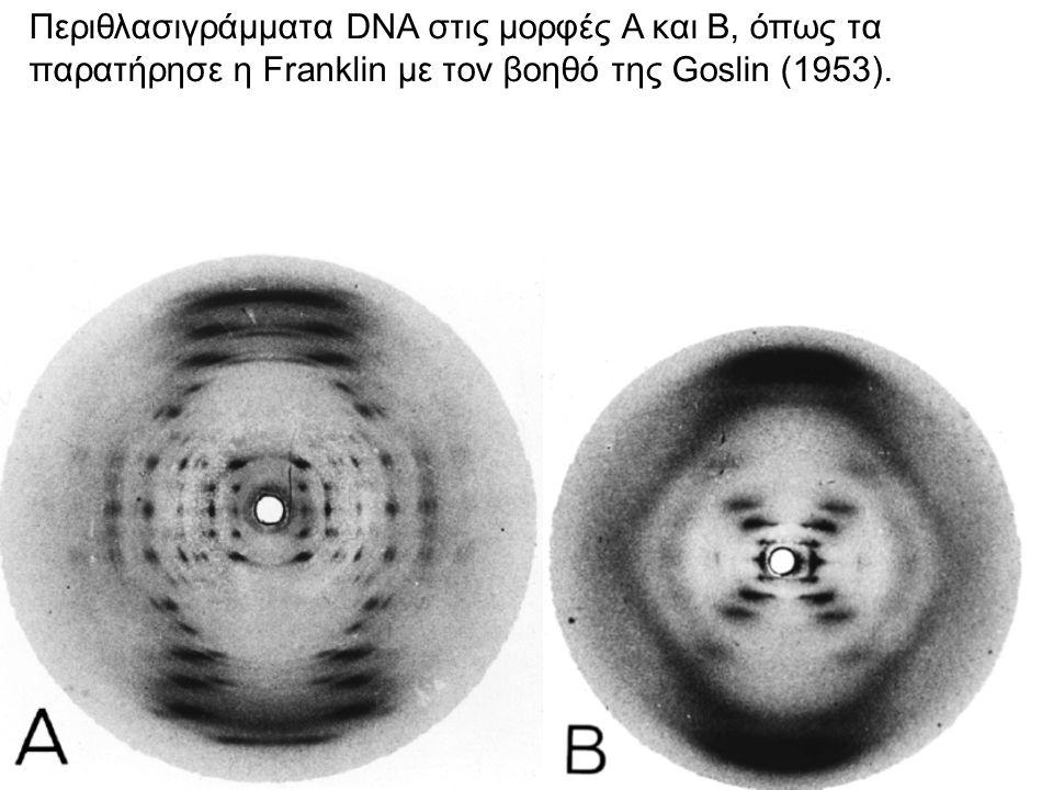 Ζευγάρωμα βάσεων στο DNA (κάτω) Χωροπληρωτικό μοντέλο της διπλής έλικας του DNA (μορφή Β) 