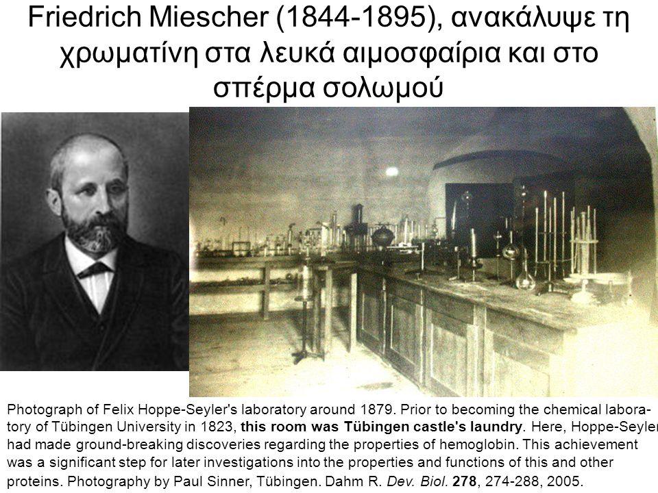 Phoebus Aaron Theodore Levene (1869-1940) and the tetradeoxynucleotide model of DNA Ανακάλυψε τη ριβόζη, τη δεοξυριβόζη, αλλά τα πειράματά του συνηγορούσαν για μια δομή του DNA όπως η δίπλα (ονο- μάστηκε η υπόθεση του τετρανουκλεοτιδίου)