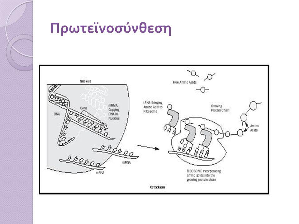 Πρωτεϊνοσύνθεση