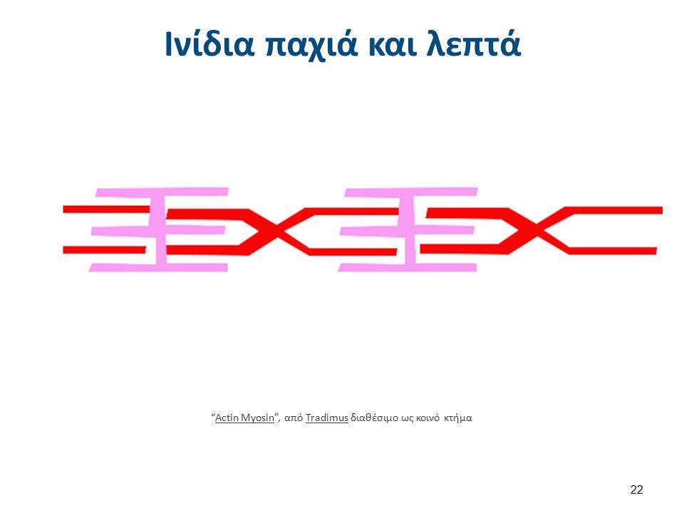 """Ινίδια παχιά και λεπτά """"Actin Myosin"""", από Tradimus διαθέσιμο ως κοινό κτήμαActin MyosinTradimus 22"""