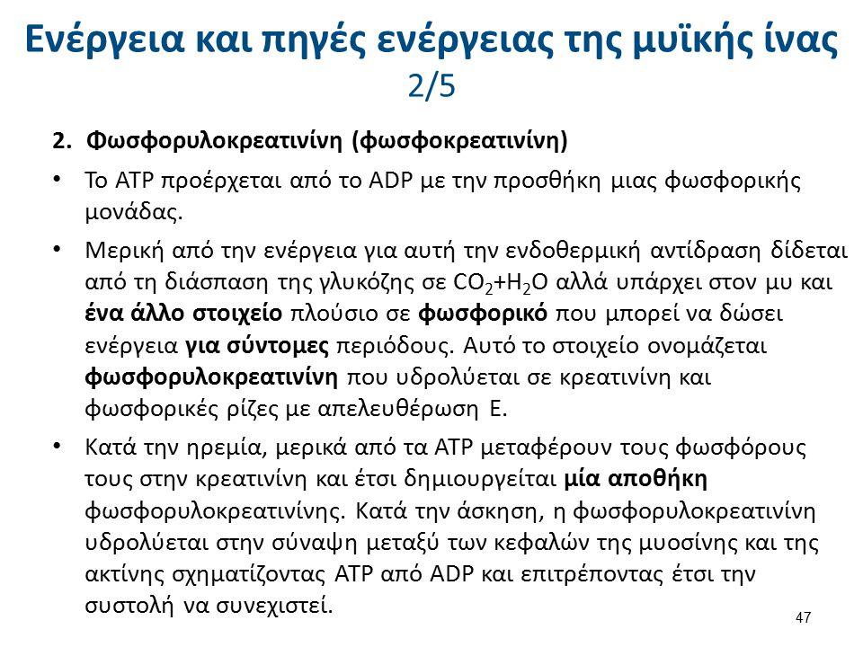 2.Φωσφορυλοκρεατινίνη (φωσφοκρεατινίνη) Το ΑΤΡ προέρχεται από το ADP με την προσθήκη μιας φωσφορικής μονάδας. Μερική από την ενέργεια για αυτή την ενδ